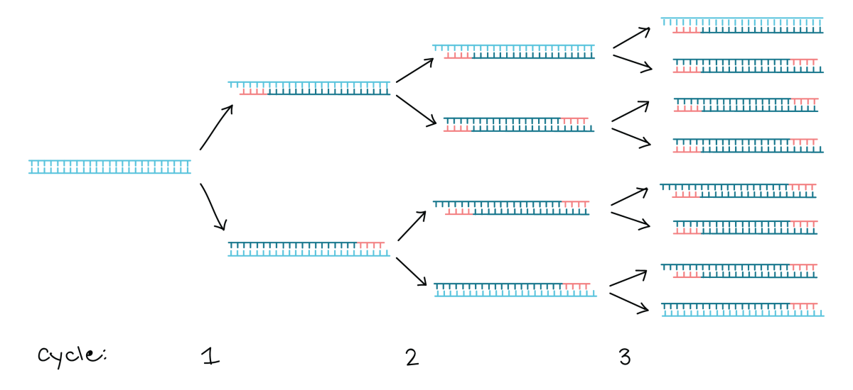 Everything That You Need to Know About Polymerase Chain Reaction